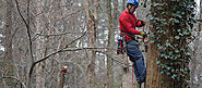 Ideal Times for Tree Pruning, Cutting and Emergency Tree Removal