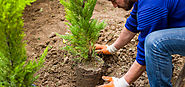 Planting Trees, Shrubs and Perennials Toronto