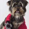 31 Patterns for Pet Clothing and More Pet Crafts