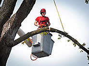 Complete Tree Services - Dreamworks Tree Services