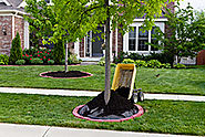 The Best Time to Plant or Transplant a Tree - Dreamworks Tree Services