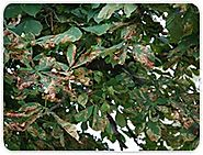 Common Diseases In Trees And Shrubs