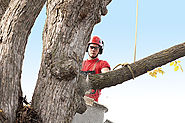Trusted & Qualified Arborist Service in Port Perry