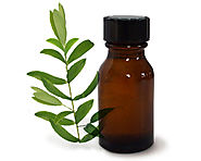 Top 10 Tea Tree Essential Oil Uses and its Health Benefits
