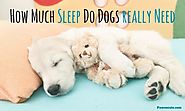 How Much Do Dogs Sleep and How Many Hours Does Fido Really Need Per Day? (The ANSWERS may surprise you!) | Lifestyle