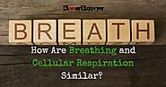 How Are Breathing and Cellular Respiration Similar? Get the Answers Now