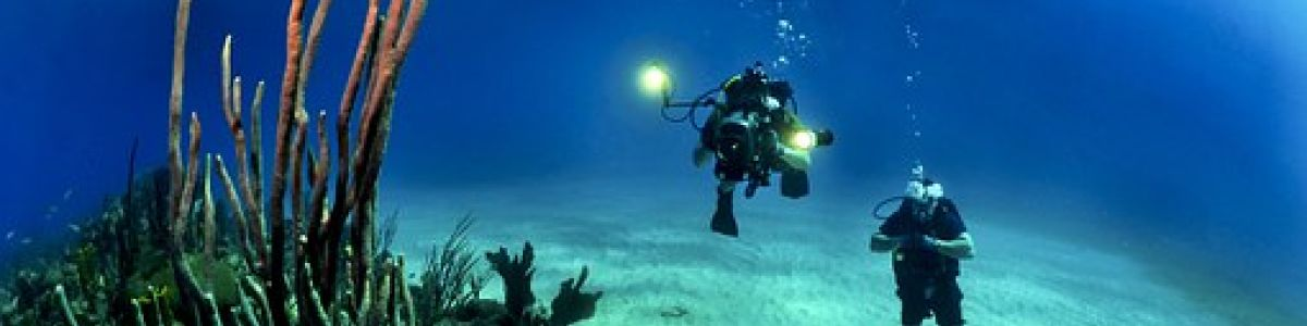 Headline for Diving Regulations in Maldives - Things to Know Before You Dive in