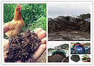How to Process Chicken Manure into Organic Fertilizer