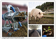 How to Compost Pig Manure into Organic Fertiliser