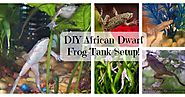 Best DIY African Dwarf Frog Tank Setup Ideas Of The Year!