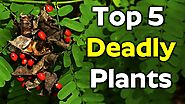 TOP 5 Plants That Will Kill You