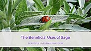 8 Facts About the Beneficial Uses of Sage ·