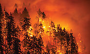 Washington Senator Calls Out Congress For Failing to Adequately Fund Pacific Northwest Wildfire Prevention in Upcomin...