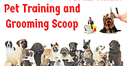 Pet Training and Grooming Scoop