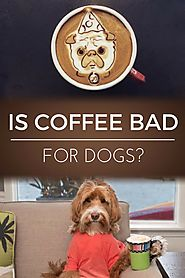 Is Coffee Bad for Dogs? | Dopimize