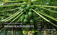 Papaya Health Benefits – The Amazing Uses Of The Entire Plant – With little Side effects