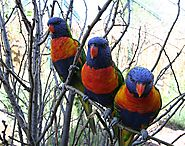 Denver Zoo - Lorikeet Adventure