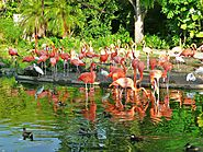 Zoo Miami Dade country
