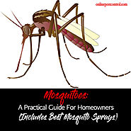 Mosquitoes: A Practical Guide For Homeowners (Includes Best Mosquito Sprays)