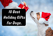 10 Best Holiday Gifts for Dogs. | Furbabeez