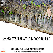What's That Crocodile? | Bookings open on Entryeticket.com