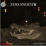 Zoo Snooze 2019 |Online entry available on Entryeticket