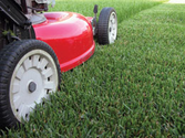Properly Mow Your Lawn