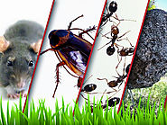 Pest Control Coral Springs, FL