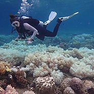An aerial survey revealed that two-thirds of the reef has now been devastated by severe coral bleaching.