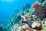 The diverse reef is home to 1,625 species of fish 1,400 species of coral and over 3000 species of molluscs.