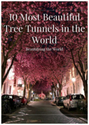 10 Most Beautiful Tree Tunnels in the World: Be...