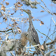 Texas Wildlife Chooses Fulshear Run Pond for Heron Release - Trendmakerhomes
