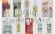 The Best Dog Repellent Spray of 2017 to Keep Your Dog Away