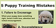 5 Common Puppy Training Mistakes