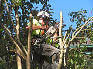 Specialists Of Emergency Tree Removal