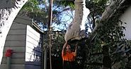 Availing Of Tree Lopping Services Sydney