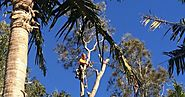 Tree Services Company in Sydney