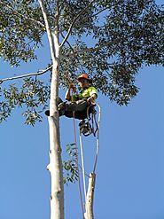 Meeting All Environmental Standards With Tree Lopping Sydney Services