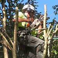 Tree Stump Grinding Services