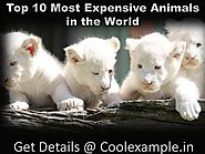 Know 10 Most Expensive Animals in the World | Check Names, Price In Indian Rupee