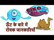 Camel 🐫 Ship of the Desert | General Knowledge Video for Kids | Animal Facts | Ciko Se Sikho