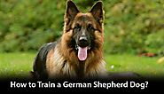 How to Train a German Shepherd Dog? - Hours TV