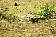 Fauna at Yala - Reptiles