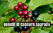 How To Use Cascara Sagrada? | Health Benefits Of Cascara Sagrada