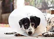 How to Help Your Dog Recovery From Surgery – HPZ™ PET ROVER™