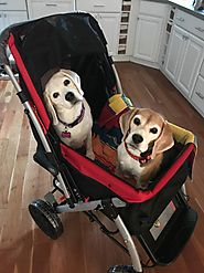 Dog Strollers are the Best and Comfortable Way of Keeping the Pets Secure! – Pet Rover