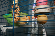 Bird Cage Accessories Can Improve The Quality And Length Of Your Bird's Life