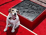 """The Dog"" (Uggie) - The Artist"