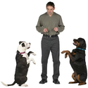 How To Train an Older Dog - Adult Dog Training Tips