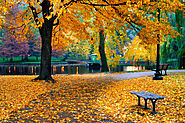 Boston Fall | Experience Parks, Leaves Turning Colors | Boston MA